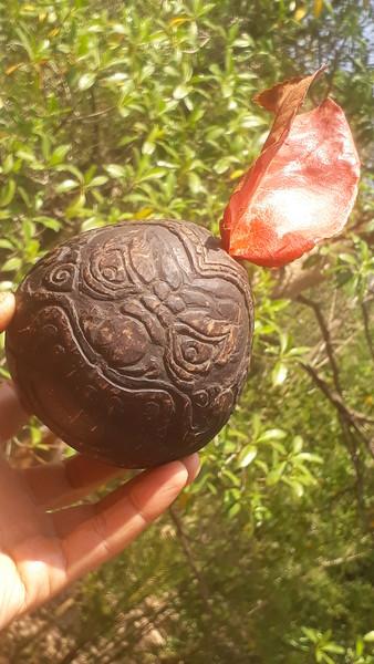 Rahu Coconut