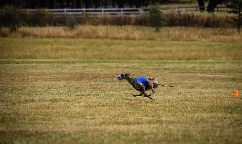 greyhound-43.jpg