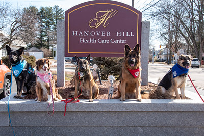 Therapy Dog at Hanover Hill