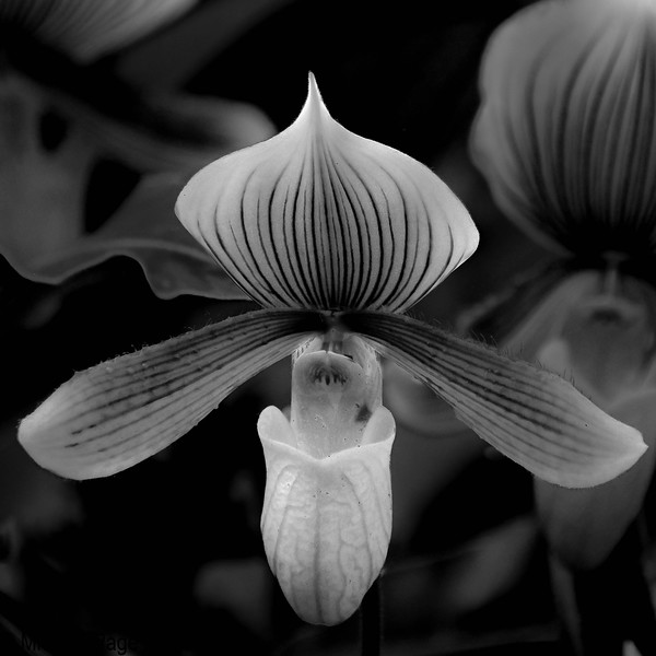 Orchid Stack-A 17-10-24-1.jpg