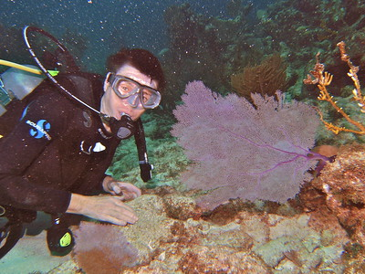 Dive/Key Largo/FL - Dec., 2008