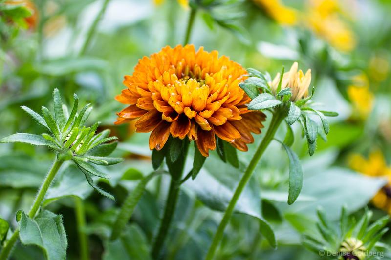 golden, flower petals in burnt orange and yellow