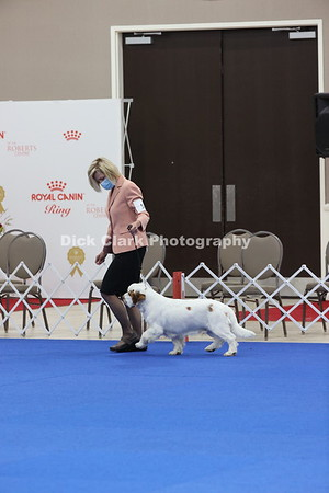 CSCA Regional Specialty Dogs - Puppy 6-9 Months