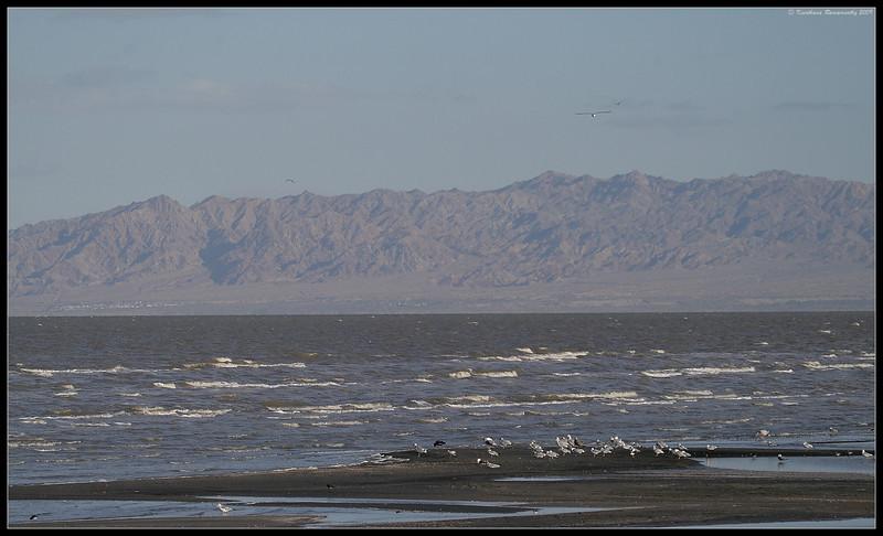 Scape of Salton Sea at Obsidian Butte, Salton Sea, Imperial County, California, November 2009