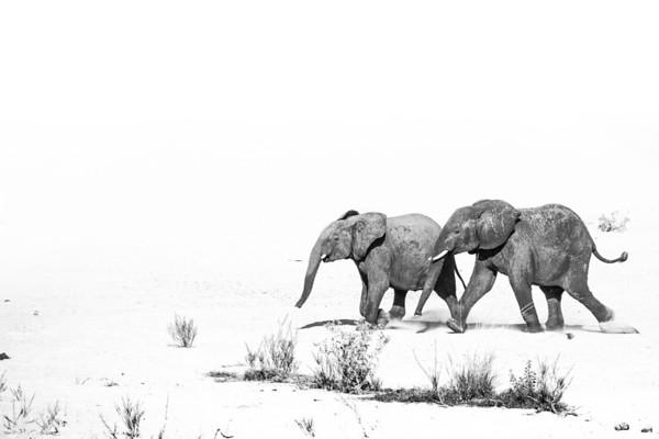 WILDLIFE | 2017 Kruger - Tshukudu