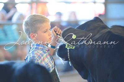 Commercial Heifer Ringshots