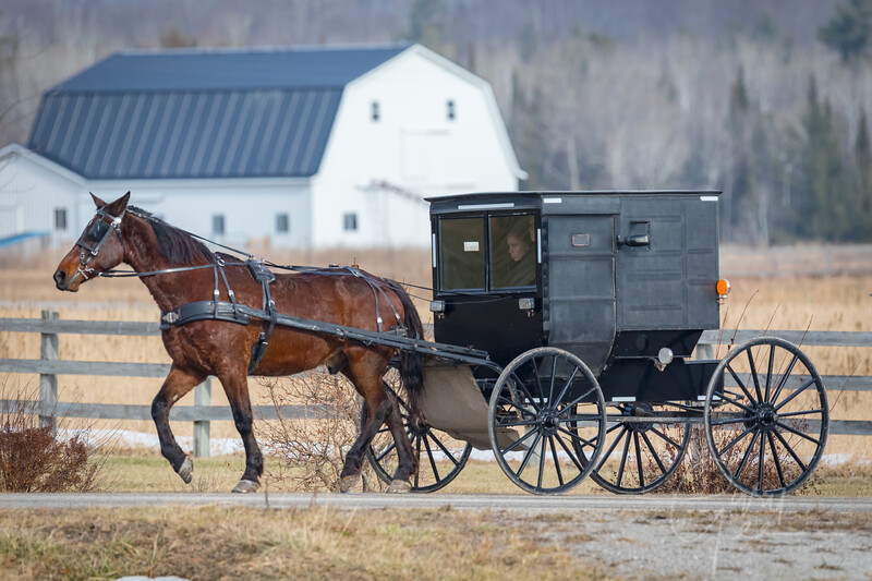 Amish Buggy on a Sunday Afternoon