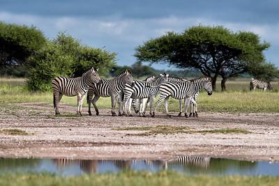 Botswana Wet Season 2015