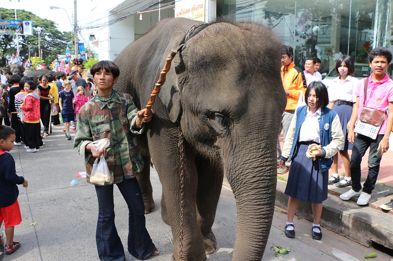 2014-11-14 Surin Elephant Welcome Feast 405.JPG