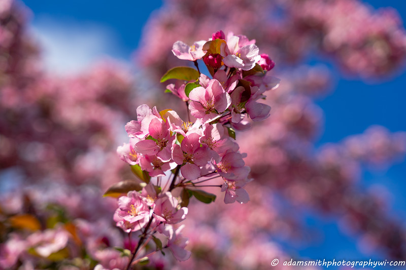 spring-flowers-eau-claire-wisconsin-12.jpg