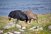 Two ostrich standing in tall grass next to the ocean. Photography fine art photo prints print photos photograph photographs image images artwork.