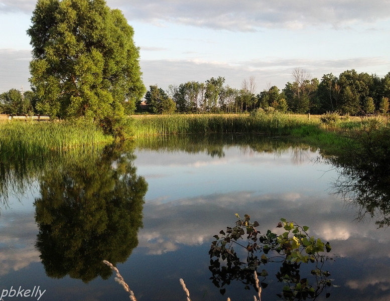 July 19.  Nice reflections on my super-still pond.  And all I had was my phone!