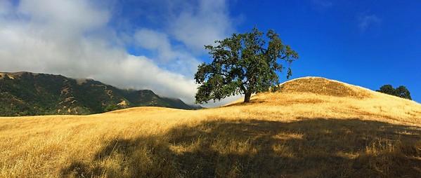 Pleasanton Ridge