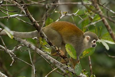 Galapagos Islands and Ecuador Rainforest Trip 2015