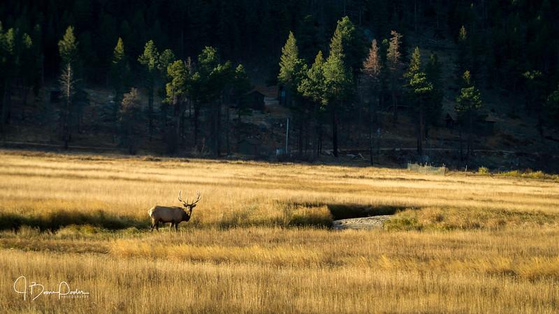 20161009-elk_meadow-001.JPG