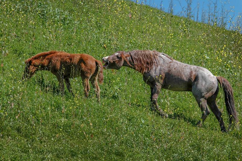 Stallion Coaxing Foal RTF