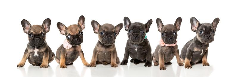 Pups-23-Edit-Edit.jpg