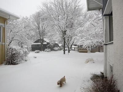 Blizzard Shoveling Morning 2015