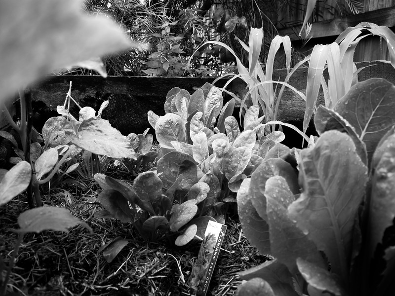 Garden Oct 2012 (1 of 35).jpg