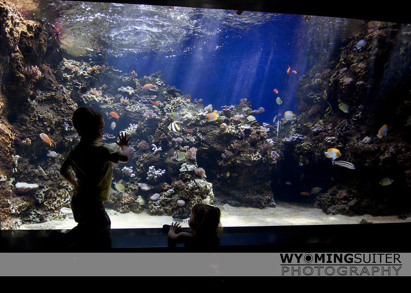 kids_aquarium_3635water.jpg