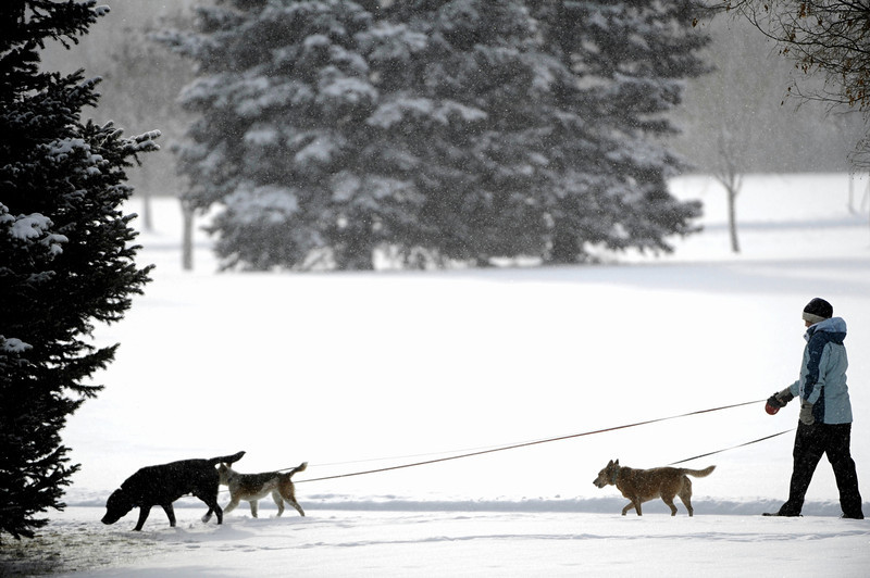 . Bonnie Weizman walks her dogs at Bible Park along Yale Ave near Monaco St. in Denver Colorado in the snow Thursday morning,  Feburary 21st, 2013. Andy Cross, The Denver Post