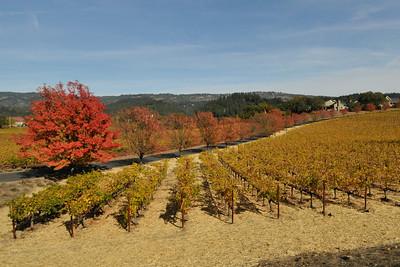 Vineyards Nov 2013