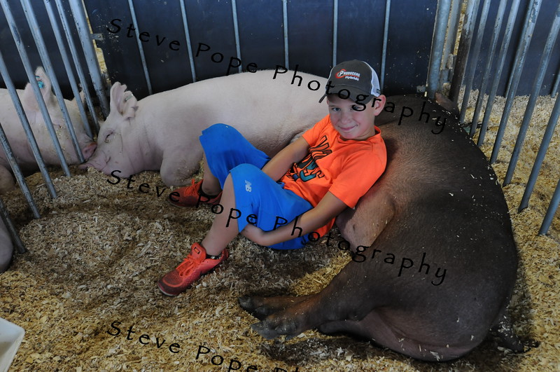 Eight year old Zade Schell, of Stacyville, relaxes with a hog at the Iowa State Fair on Aug. 20. (Iowa State Fair/ Steve Pope Photography)