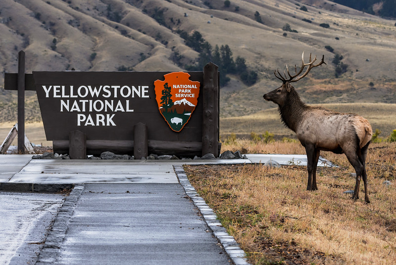 Welcome to Yellowstone