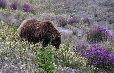 Yukon & Alaska 2017 Part 3: Valdez to home