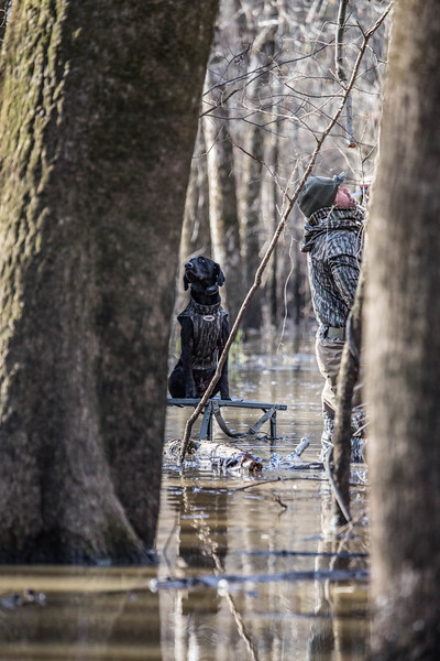 Mo and Chad Belding hunting the flooded timber of Arkansas.