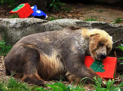 2015-12-23 Zoo animals receive Christmas treats