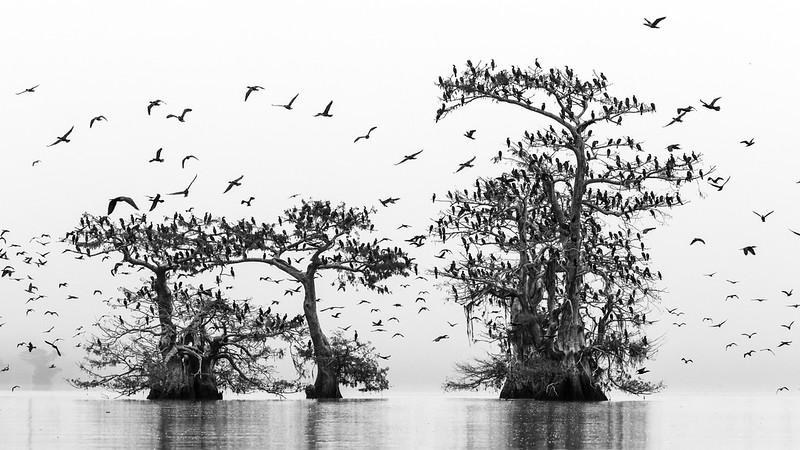 Cypress_Swamps_1117_PSokol-2813.jpg