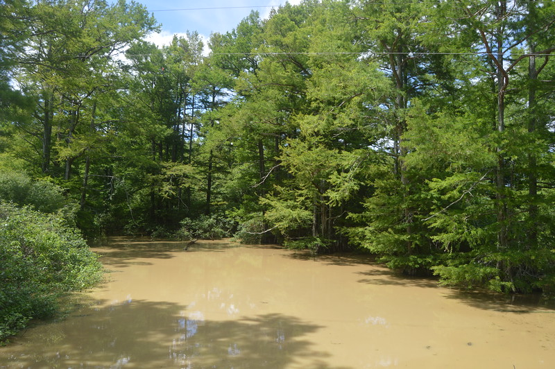 052 Swamp Near Walnut Lake.JPG
