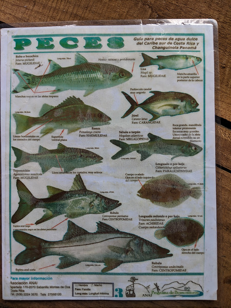 bribri fish.jpg