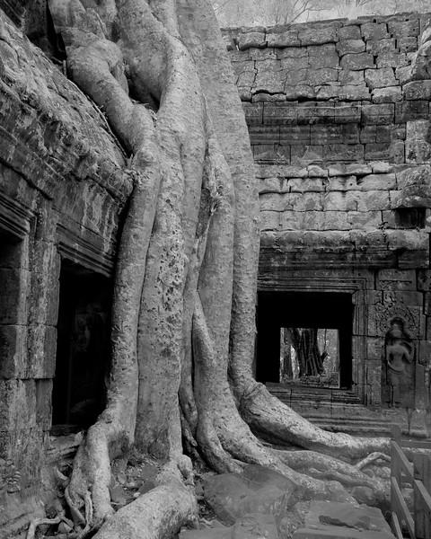 Roots3 16x20.jpg