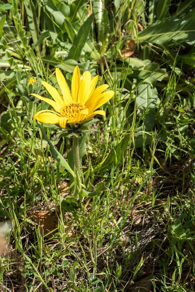 Edgewood_Park_wildflowers-06.jpg