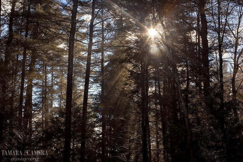 Sunshine Woods-4.jpg