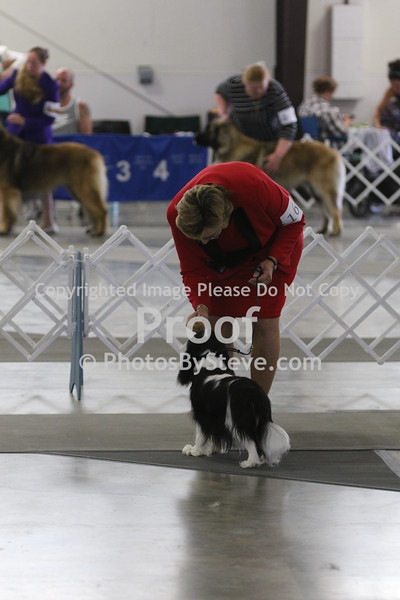 2016 Coeur d'Alene Dog Show-Cavaliers