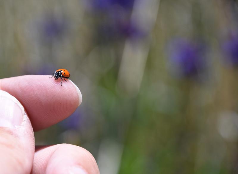 Ladybug-Colorado-finger-Echo-canyon.jpg