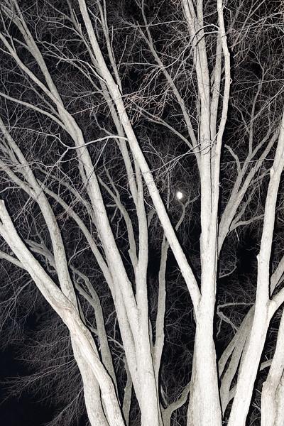 TreeMoon.jpg