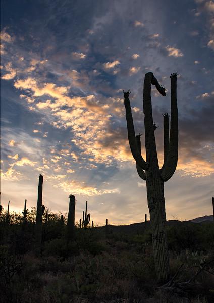 Arizona_060617_0447.jpg