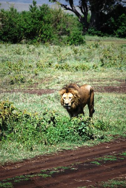 Ngorongoro (128).JPG