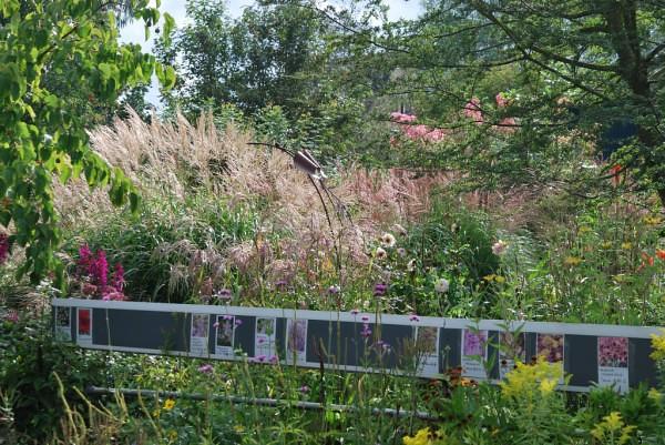 kweekbedden grassen.jpg