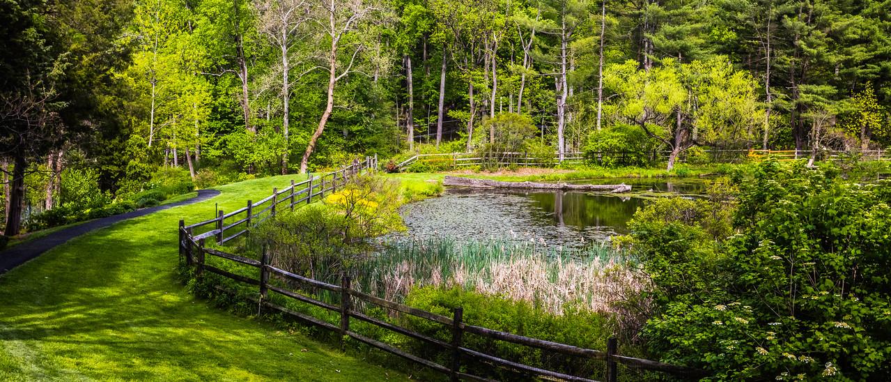 滨州詹金斯植物园(Jenkins Arboretum),池塘小景