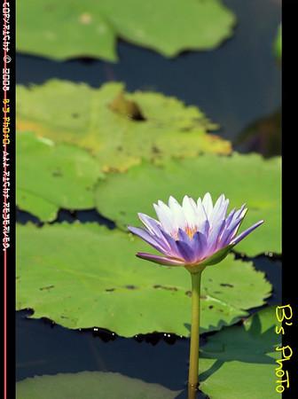 20080726 - Wetland Park