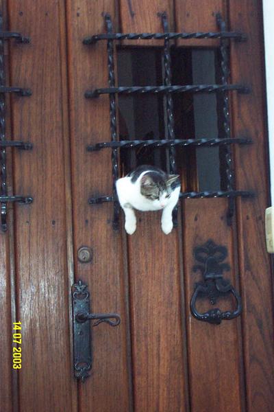 Brian Cat 3.jpg