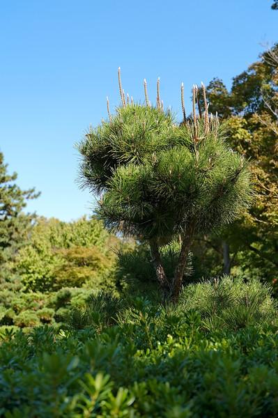Fort Worth Botanic Gardens, Japanese Garden - 18 October 2012