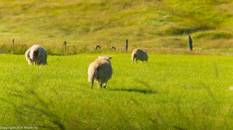 Uploaded - Vík & Vestmannaeyjar July 2012 003.JPG