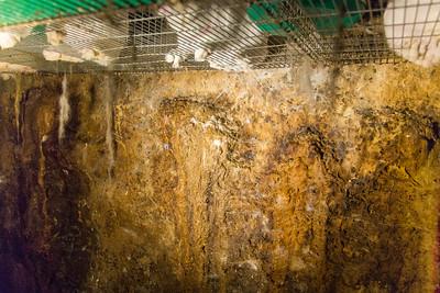 Lapins : élevage du Morbihan - 2014