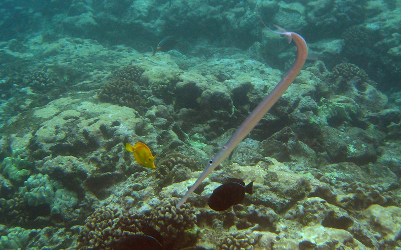 513- 20080416- Hawaii 20-Snorkelling IMG_0767 cropped.jpg